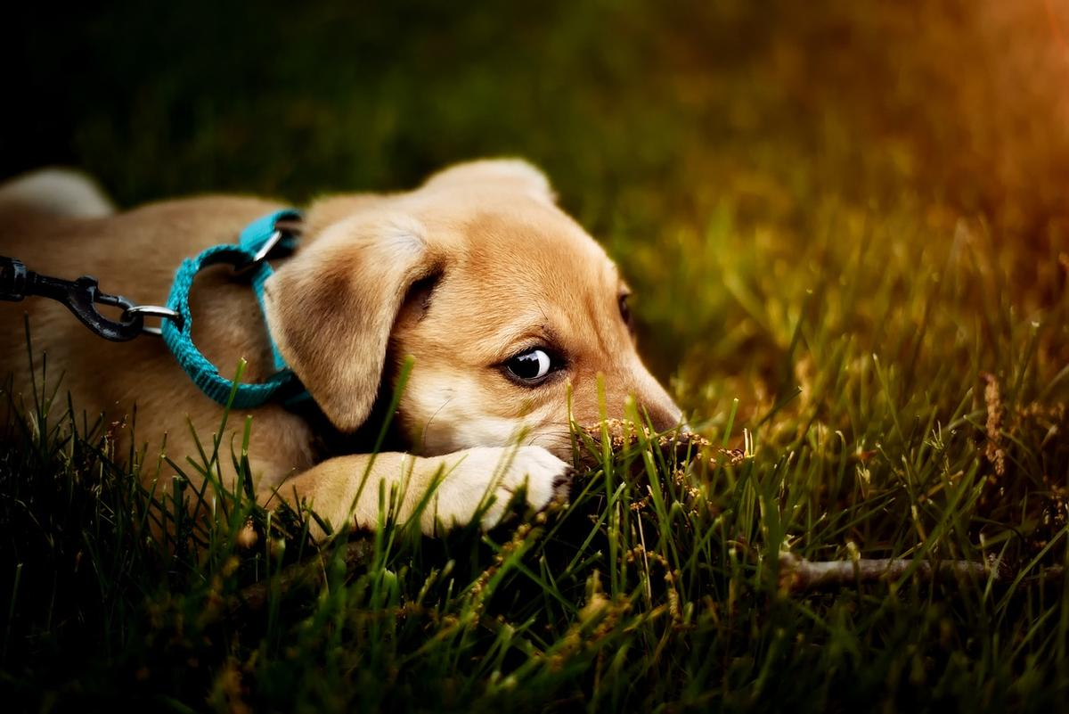 Durchfall Beim Hund Was Kann Ich Tun Gesundheitszentrum Fur Kleintiere