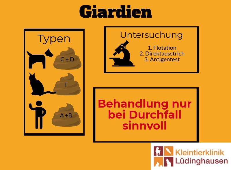 Giardien Bei Hund Katze Und Dem Menschen Kleintierklinik