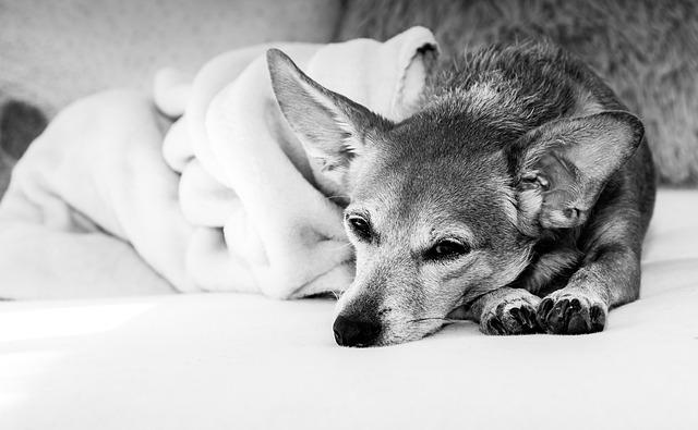 wann sollte man zum tierarzt gehen wenn der hund. Black Bedroom Furniture Sets. Home Design Ideas
